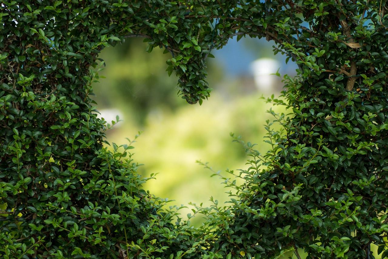 Hjärta i en buske